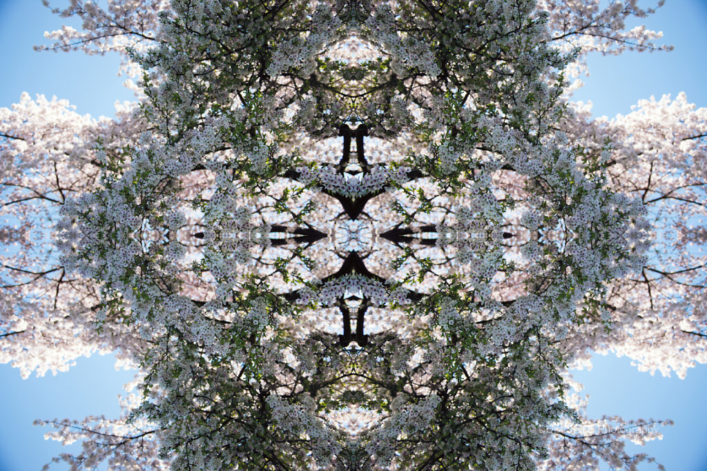 POST APOCALYPSE FLORAL BLOOM 6038 X 2